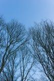 反对蓝天的空的树枝 免版税库存图片