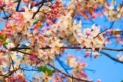 反对蓝天的美丽的花。 免版税库存照片