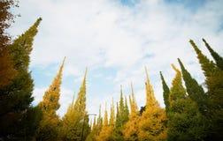 反对蓝天的美丽的银杏树树在美济礁津沽Gaien的秋天停放,东京-日本 免版税图库摄影