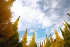 反对蓝天的美丽的银杏树树在美济礁津沽Gaien的秋天停放,东京-日本 免版税库存图片