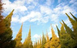 反对蓝天的美丽的银杏树树在美济礁津沽Gaien的秋天停放,东京-日本 库存照片