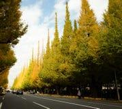反对蓝天的美丽的银杏树树在美济礁津沽Gaien的秋天停放,东京- JapanThe银杏树树的秋天颜色 库存图片