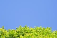 反对蓝天的鲜绿色的叶子在框架的底部,使用作为背景的拷贝空间或墙纸 免版税库存图片