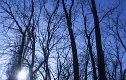 反对蓝天的死的树枝 免版税库存图片