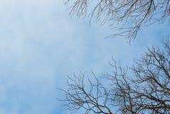反对蓝天的死的树枝 免版税库存照片