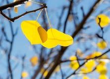 反对蓝天的黄色叶子 免版税库存图片