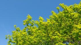 反对蓝天的绿色叶子 免版税库存图片