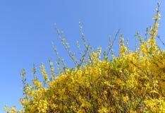 反对蓝天的黄色植物 图库摄影