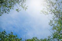 反对蓝天背景的绿色叶子 库存图片