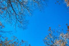 反对蓝天,成田,日本的五颜六色的秋天树 库存图片