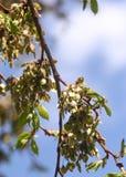 反对蓝天, backlite,春天的开花的ilm 库存图片