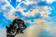 反对蓝色多云天空的树上面在一个被覆盖的晴天 免版税库存图片