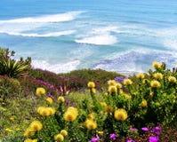 反对蓝色海浪背景的明亮的黄色和紫色花  图库摄影