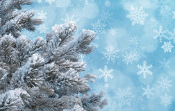 反对蓝色背景的冷淡的杉木枝杈与雪花 免版税图库摄影