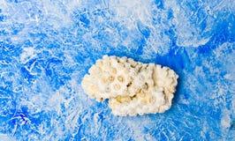 反对蓝色背景的小珊瑚岩石 库存图片