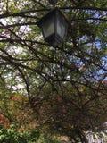 反对藤机盖的灯笼  免版税库存照片