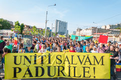 反对虐待砍伐森林的宣言 免版税库存照片
