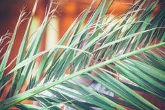 反对被弄脏的背景的巨大的热带棕榈叶 库存照片