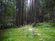 反对迷人冬眠的树背景的一块宽敞绿色森林沼地  放松的地方为孩子和 库存图片