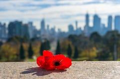 反对都市风景的红色鸦片花在背景 免版税库存图片