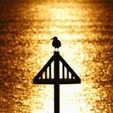 反对金黄日落的海鸥剪影 免版税库存图片