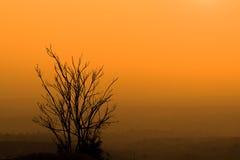 反对阳光的死亡树在日落的天空背景 库存照片