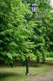反对雄伟的背景和绿叶暴乱的街灯在春天城市 图库摄影
