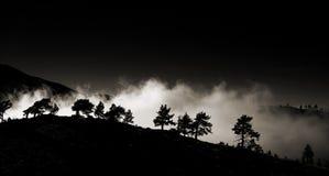 反对雾的林木线 库存图片