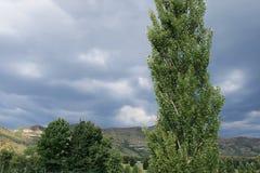 反对风雨如磐的天空的白扬树 免版税库存照片