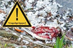 反对鸟流感病毒的符号一般预防 库存照片