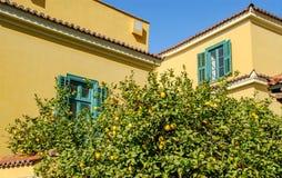 反对黄色大厦的柠檬树 免版税库存照片