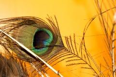 反对黄色背景的孔雀羽毛 库存照片