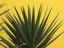 反对黄色背景的尖刻的绿色庭园花木 免版税库存照片
