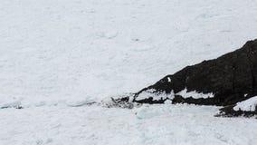反对黑暗的峭壁的浮冰块在纽芬兰与拉布拉多晃动 库存照片