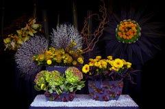 反对黑暗的背景的异乎寻常的花的布置 免版税库存图片