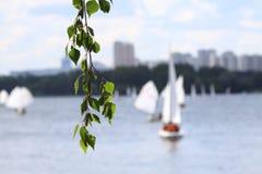 反对水和小船背景的桦树分支  免版税库存图片