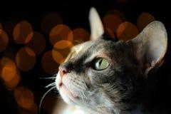 反对黑暗的发光的背景的猫特写镜头与拷贝空间 免版税库存照片