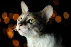反对黑暗的发光的背景的逗人喜爱的猫 库存图片