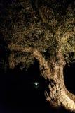 反对满月的古老橄榄树,西班牙 库存照片