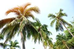 反对晴朗的天空的好的棕榈树 免版税库存照片