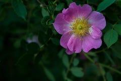 反对绿色植被的美丽的紫色花 免版税图库摄影