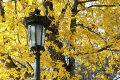 反对黄色槭树叶子背景的灯笼  免版税库存图片