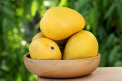 反对绿色的新鲜的黄色成熟芒果 库存照片
