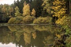 反射一个小池塘的表面上的五颜六色的叶子在森林中间 库存图片