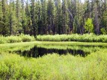 反射在一个绿色池塘 库存照片