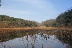 反射在与蓝天的水池的小山和森林 免版税库存图片