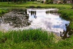 反射在农村池塘在7月 免版税库存照片