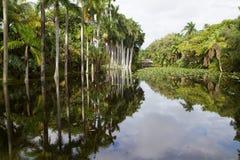 反射在帽子议院里的鲜亮的棕榈树脱落 免版税库存照片