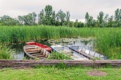 反射在有美丽的莲花的,四小bo一个湖的纸莎草 免版税库存照片