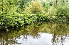 反射在森林池塘 库存图片